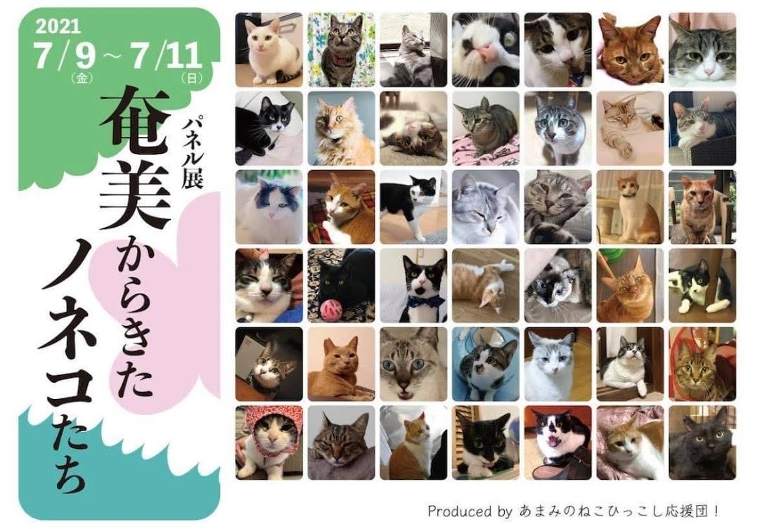 「奄美大島の世界自然遺産登録のため、犠牲になる猫達がいることを知っていますか?」
