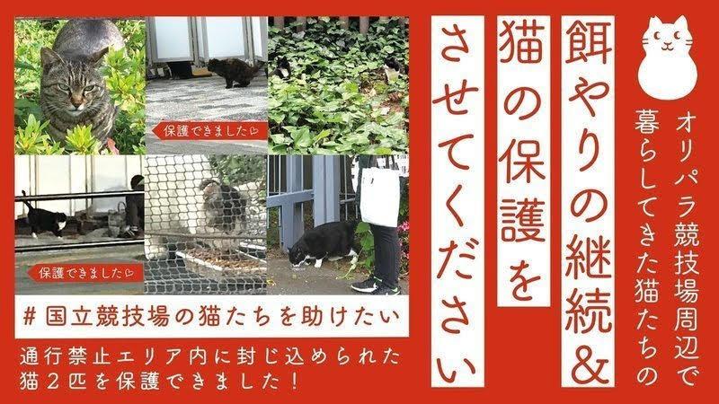 「#国立競技場の猫たちを助けたい&ぶらっくさむらいクラファンにご協力をお願いします(*˘︶˘*).。.:*♡」