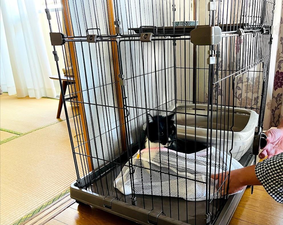 「北新宿4丁目生活、19年目に突入しましたーーーッ‼&そしたら、猫をお預かりすることになりましたーーーッ(*゚▽゚)ノ。」